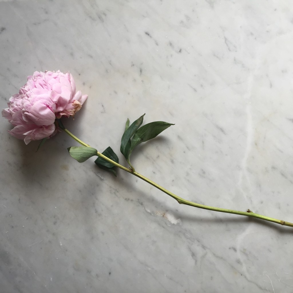 Peony and Marble
