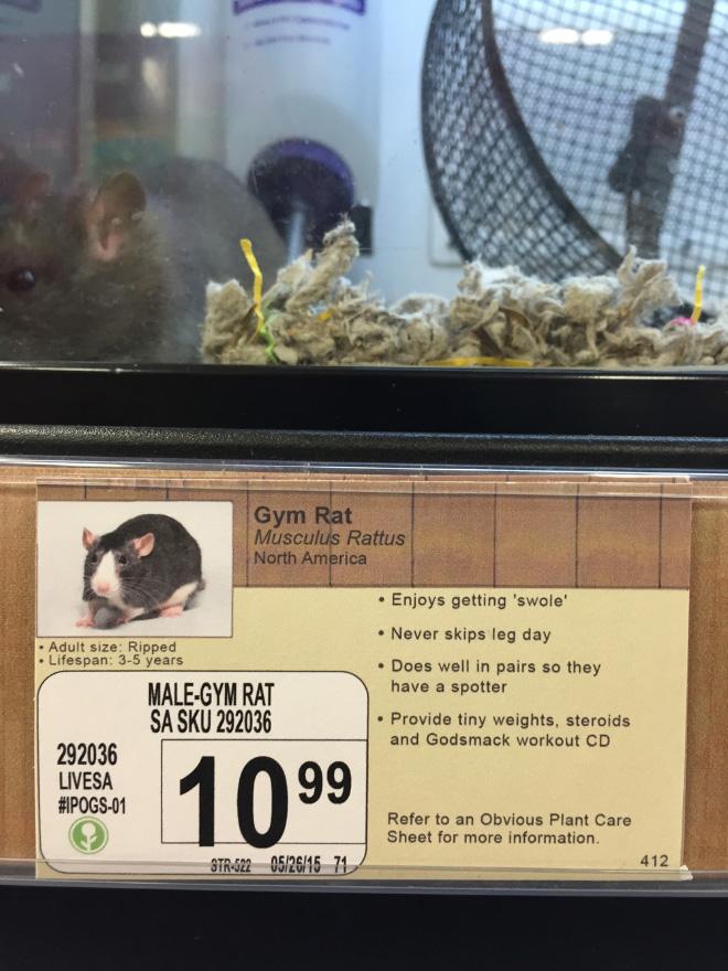 Male-Gym Rat
